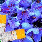 عرضه اسپری زعفران اسلی برای صادرات