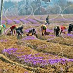 پایین ترین قیمت زعفران 3 گرمی کارتی و شیک