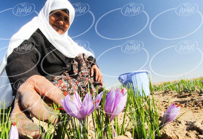 فروش زعفران سحرخیز در تهران با قیمت عالی