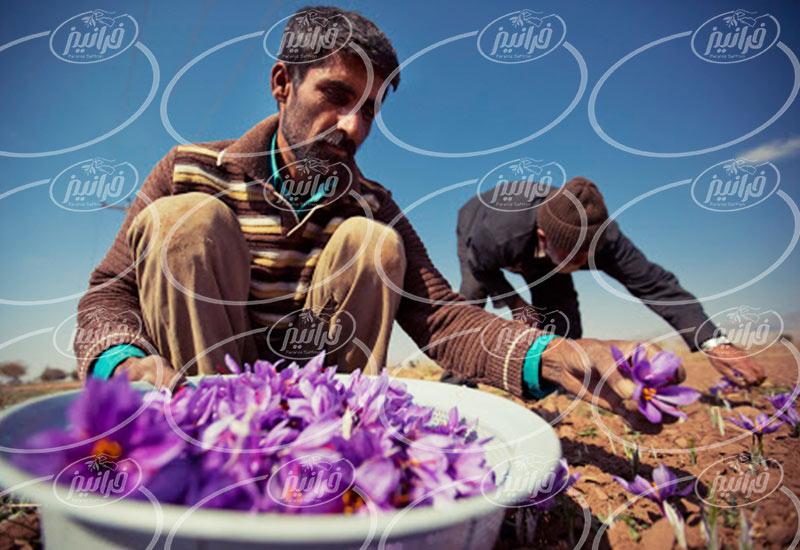سایت زعفران قائنات برای خرید عمده