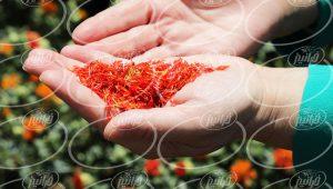 بازار پودر فشرده زعفران الیت در کشورهای همسایه