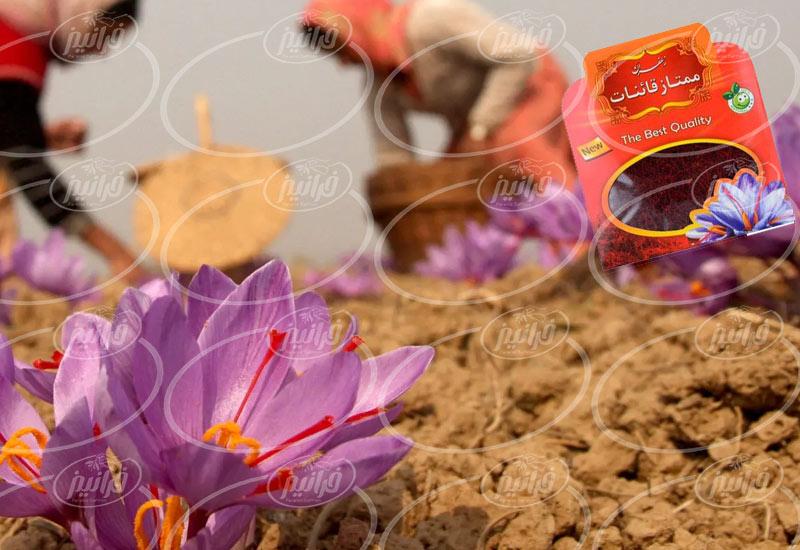 حاشیه سود پودر حاوی زعفران قائنات