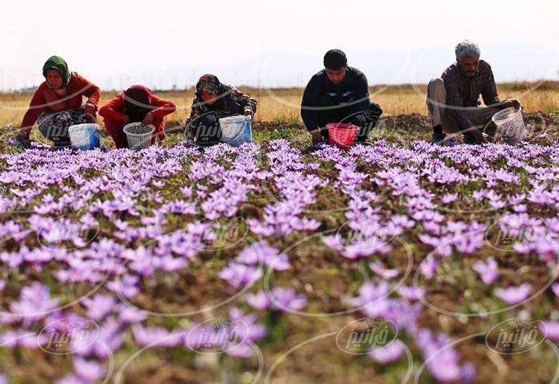 فروشنده اسانس زعفران ژیوادان در سراسر کشور