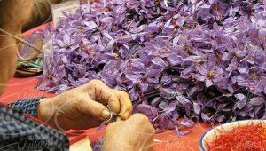 قیمت 1 کیلو زعفران در معاملات صادراتی