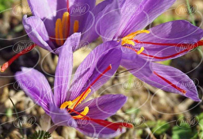 فروش عصاره زعفران اصل به صورت کارتنی